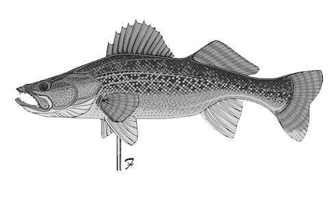 FISH WALLEYE Weathervane